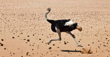 ostrich tendons for dogs