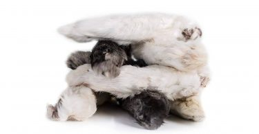 dried rabbit feet for dogs